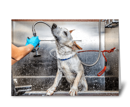 Dog Groomer Thank You Card greeting card
