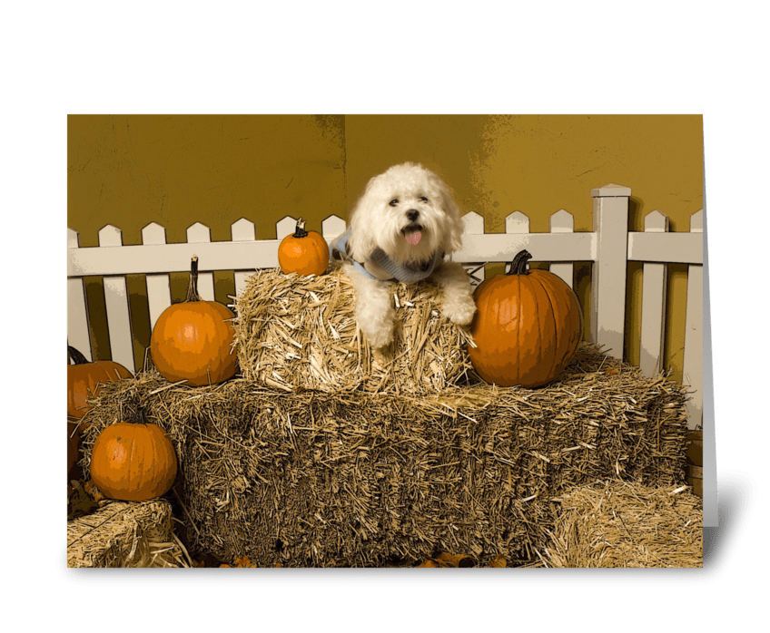 Pup in Haystack greeting card
