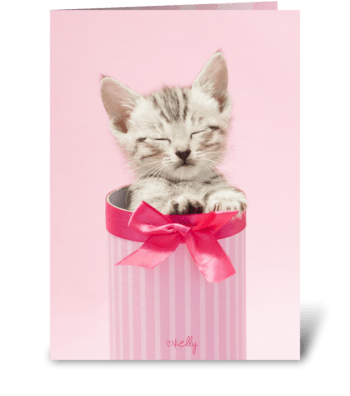 Surprise kitten greeting card