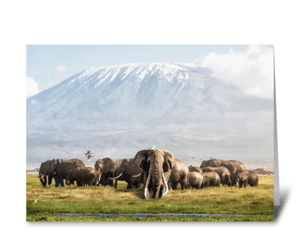 Elephants in Amboseli, Kenya greeting card