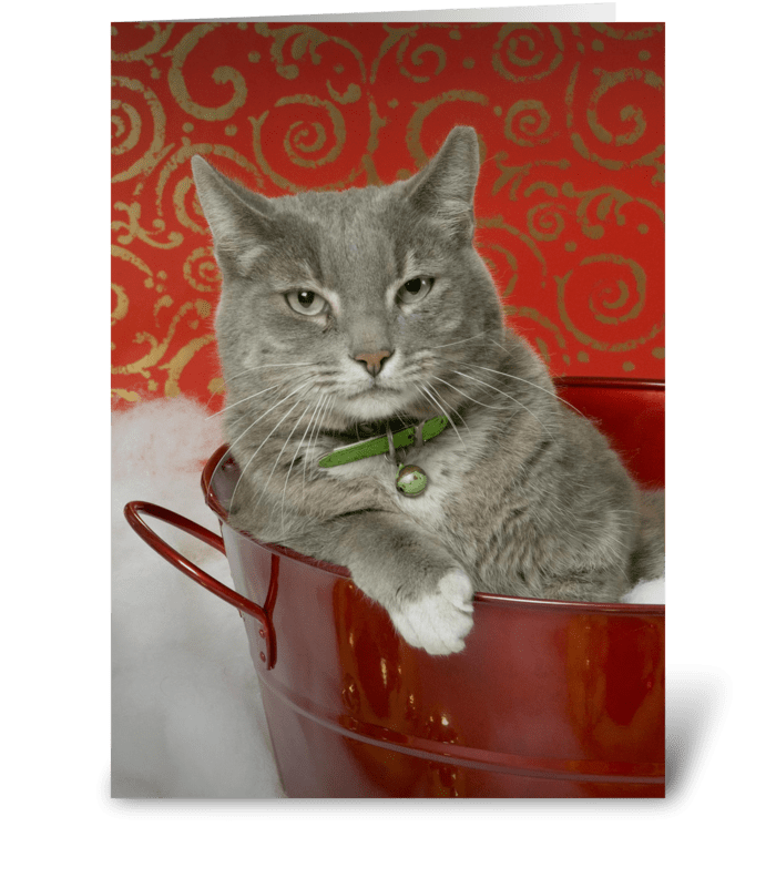 Irritated Cat greeting card