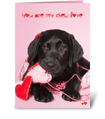 Chew Love Black Labrador Retriever greeting card