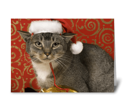Happy Cat - Merry Christmas greeting card