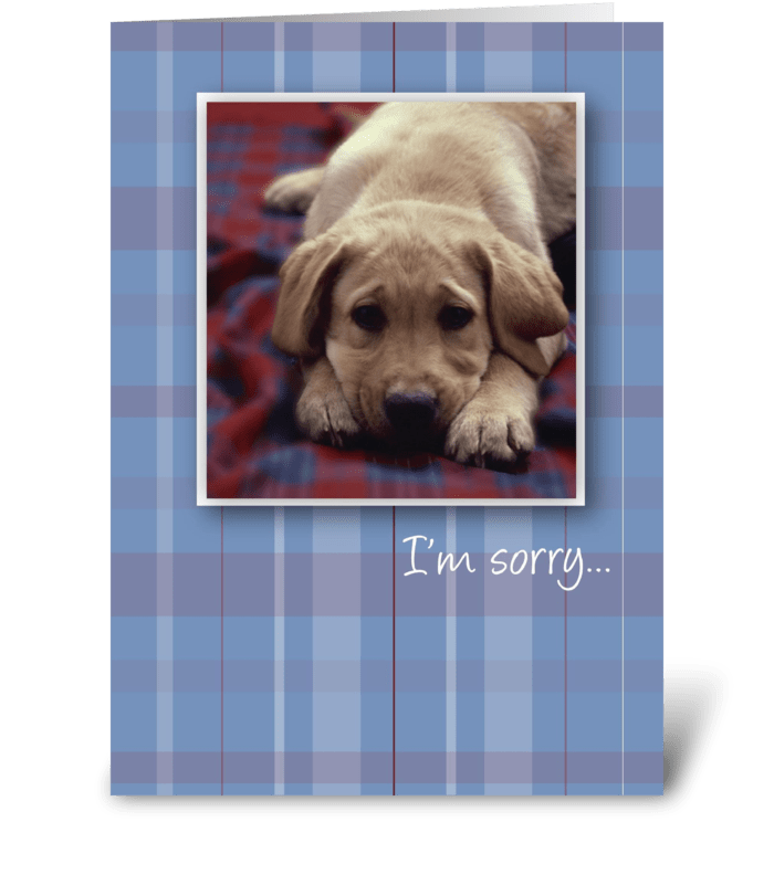 3756 I'm Sorry Puppy greeting card