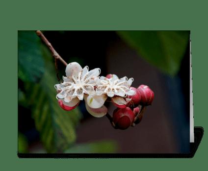 Borneo buds greeting card