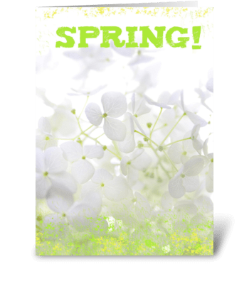 Spring! greeting card