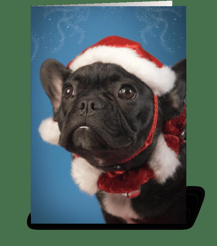 Cute Dog Christmas Greetings greeting card