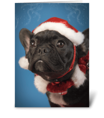 Cute Dog Christmas Greetings greeting card