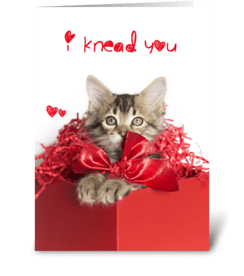 I knead you Red kitten Love greeting card