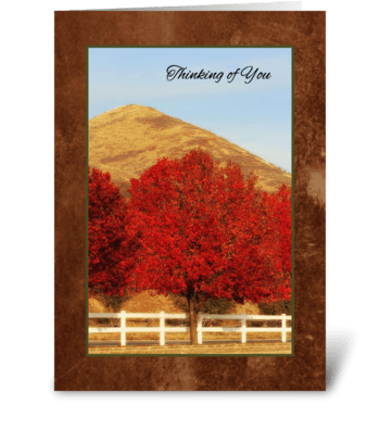 Autumn Greetings Thinking of You greeting card