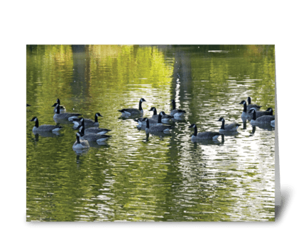Seasons: Late Summer geese on the pond greeting card