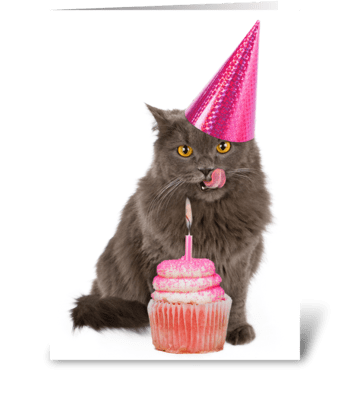 Let's Pawty Birthday Cat  greeting card