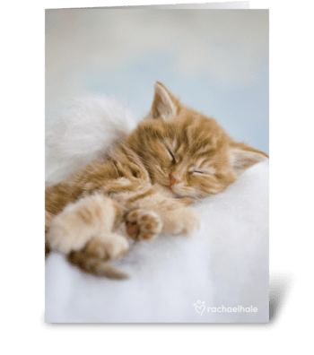 You are in our thoughts Kitten greeting card