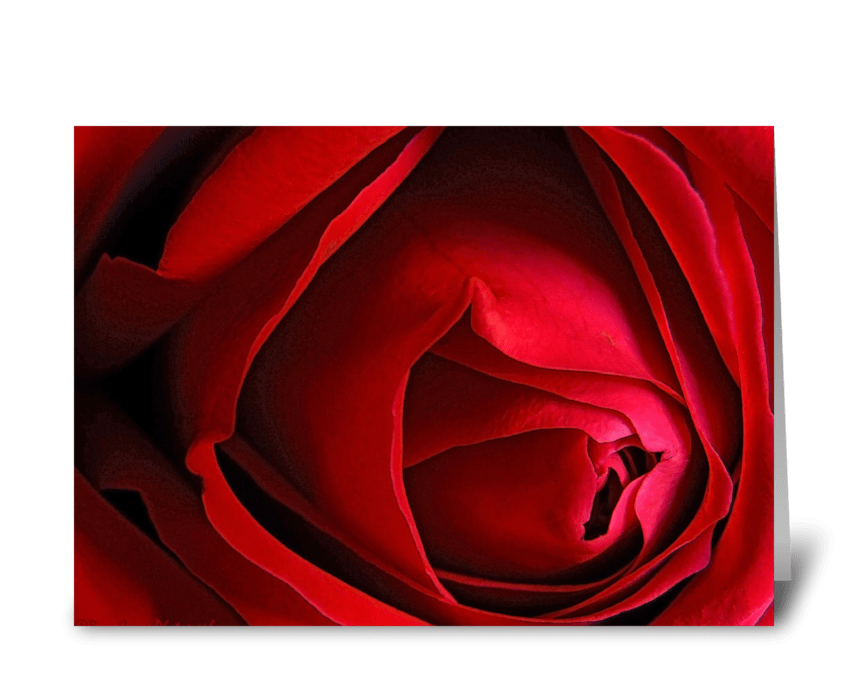 "Red Rose ""I miss you."" greeting card"