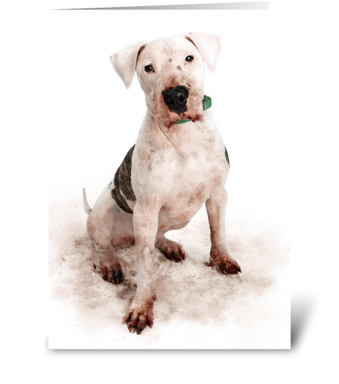 Messy Dog Hides Birthday Present greeting card