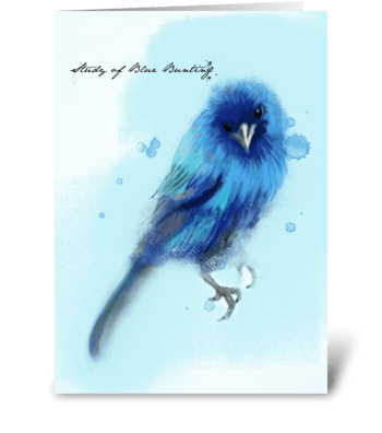 Study of Blue Bunting  greeting card